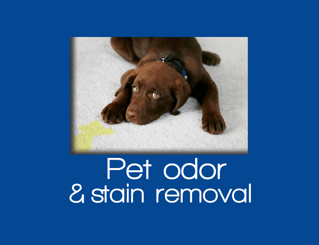 Pet Stain and Pet Odor Removal Staten Island